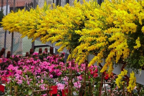 Floricoltura Scotto, il punto vendita ad Albissola Superiore SV